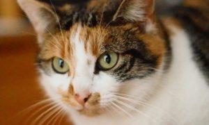 Die Bilder zeigen Portraits von fünf Katzen